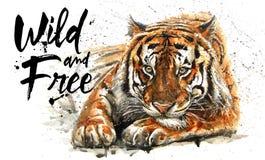 老虎水彩绘画、动物T恤杉掠食性动物,设计,狂放和释放,打印,猎人,密林的国王 皇族释放例证