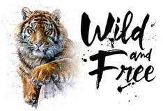 老虎水彩绘画、动物T恤杉掠食性动物,设计,狂放和释放,打印,猎人,密林的国王 免版税库存照片