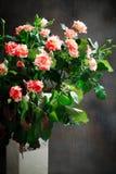 老虎玫瑰,镶边 在白色花瓶的花在黑暗的背景,卡片为情人节,拷贝空间 免版税库存照片