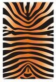 老虎的皮肤 免版税库存图片