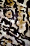 老虎皮肤样式巧克力精炼机设计 库存照片