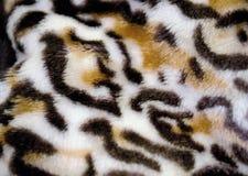 老虎皮肤样式巧克力精炼机设计 库存图片