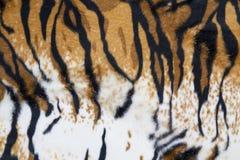 老虎皮肤纹理  免版税库存图片