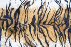老虎皮肤纹理  库存照片