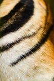 老虎皮肤 库存照片