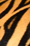 老虎皮肤 免版税库存图片