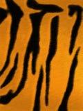 老虎皮肤 库存图片