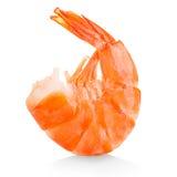 老虎虾 在白色隔绝的大虾 免版税图库摄影