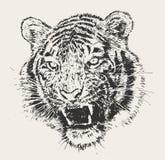 老虎顶头板刻传染媒介手拉的剪影 免版税库存照片