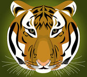 老虎 动物非洲 图库摄影