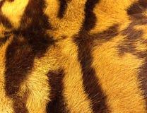 老虎-头的头发 库存照片