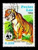 老虎(豹属底格里斯河),世界野生生物资金serie,大约1984年 免版税库存照片