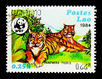 老虎(豹属底格里斯河),世界野生生物资金serie,大约1984年 免版税图库摄影