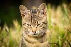 老虎仿造了坐在草和摆在的离群猫 库存图片