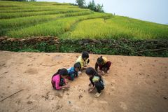 老街,越南- 2017年9月7日:少数族裔儿童使用室外在Y Ty,棒Xat区的米领域 库存照片