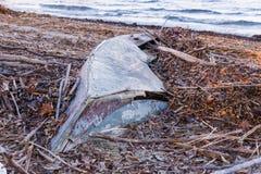 老被中断的小船 通过荒芜、时间,自然和水的阴沉的大气、力量和破坏的概念 免版税库存照片