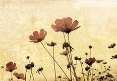 老被塑造的花 图库摄影
