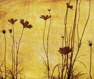 老被塑造的花 库存照片