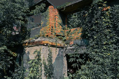 老被烧的房子长满与植物在被月光照亮夜 恐怖 黑眼睛 库存图片