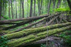 老被破坏的桥梁烂掉注册森林 免版税库存图片