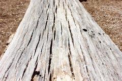 老被风化的下落的树干宏指令 库存照片