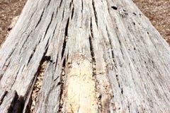 老被风化的下落的树干宏指令 免版税库存图片