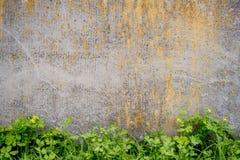 老被风化的墙壁灰色上色与草 r 库存照片