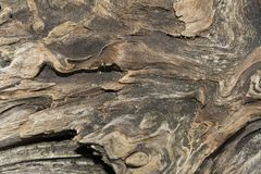 老被风化的木头,干燥断枝一棵针叶树,艺术摘要背景的关闭纹理  库存照片