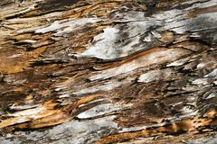 老被风化的木头 库存照片