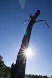 老被风化的树干 免版税库存图片