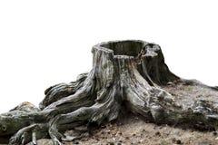 老被风化的树桩 免版税库存图片