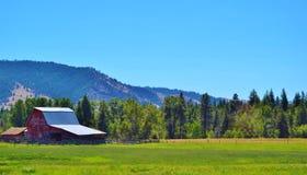老被风化的红色谷仓在蒙大拿 免版税库存图片