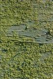 老被绘的木头和地衣 木背景详细资料老纹理的视窗 库存图片