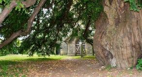 老赤柏松树在一个老英国火石撒克逊人的教会坟园 免版税库存照片