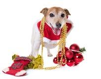 老起重器罗素狗和圣诞节 免版税库存图片