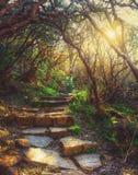 老足迹通过森林 库存照片