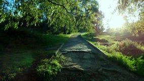 老路在公园 免版税库存图片