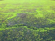 老路盖了绿色青苔 免版税库存照片