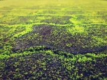 老路盖了绿色青苔 免版税库存图片