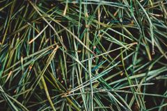 老退色的杉木针床  免版税图库摄影