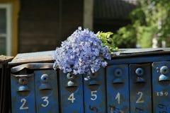 老邮箱和狂放的蓝色花 库存图片