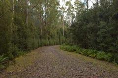 老采伐的足迹 库存图片