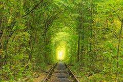 老铁路线 在树帮助下的自然创造了一个独特的隧道 爱-天生被创造的美妙的地方隧道  库存照片