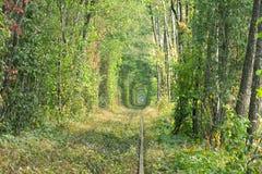 老铁路线 在树帮助下的自然创造了一个独特的隧道 爱-天生被创造的美妙的地方隧道  库存图片