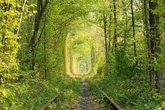 老铁路线 在树帮助下的自然创造了一个独特的隧道 爱-天生被创造的美妙的地方隧道  免版税库存图片