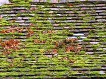老铺磁砖的屋顶充分青苔和叶子 免版税库存照片