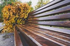 老长木凳在公园在秋天 自然葡萄酒秋天背景 免版税库存图片