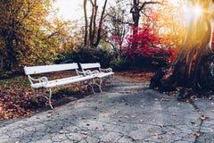 老长木凳在城市公园 自然葡萄酒秋天背景 库存图片