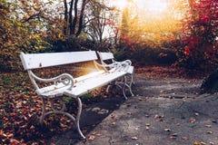 老长木凳在城市公园 自然葡萄酒秋天背景 图库摄影