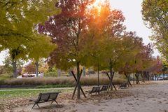 老长木凳在城市公园 免版税库存图片